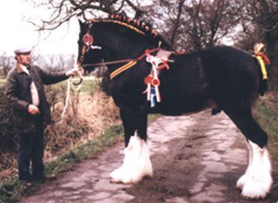 Hillmoor Prince Charles x Hillmoor Enterprise