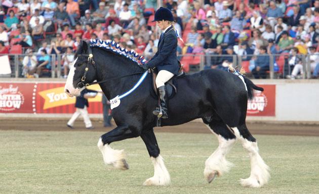 ingleside-riding
