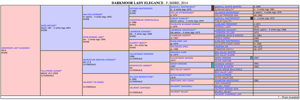 Darkmoor Lady Elegance Pedigree