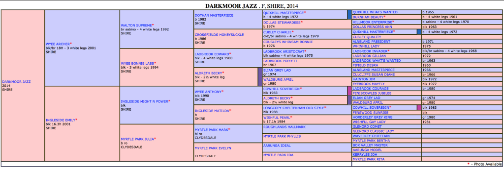 Darkmoor Jazz Pedigree